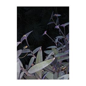 Kakerlak - Among The Minutiae